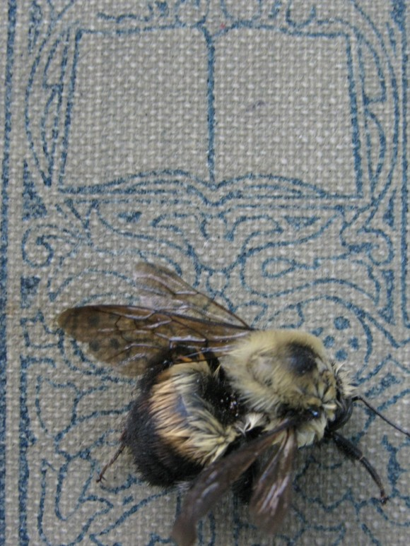 ©2010 Kelcey Parker, Exhibit B. Book of Narrative Poems, Dead Bee.