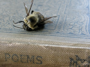 ©2010 Kelcey Parker, Poems. Book of Narrative Poems, Dead Bee.